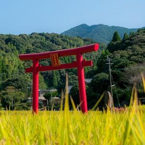 Festival of Hanao shrine